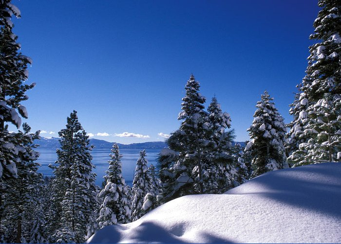 Trees Greeting Card featuring the photograph Lake Tahoe In Winter by Kathy Yates