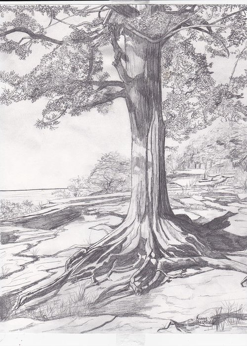 Pencil Greeting Card featuring the drawing Lake Tree by Nancy Beckerdite