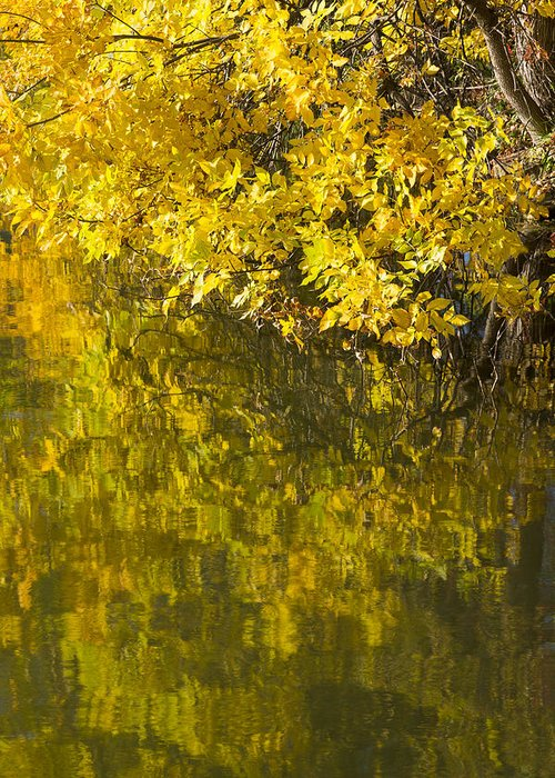 Lake Greeting Card featuring the photograph Lake Winona Autumn 12 by John Brueske