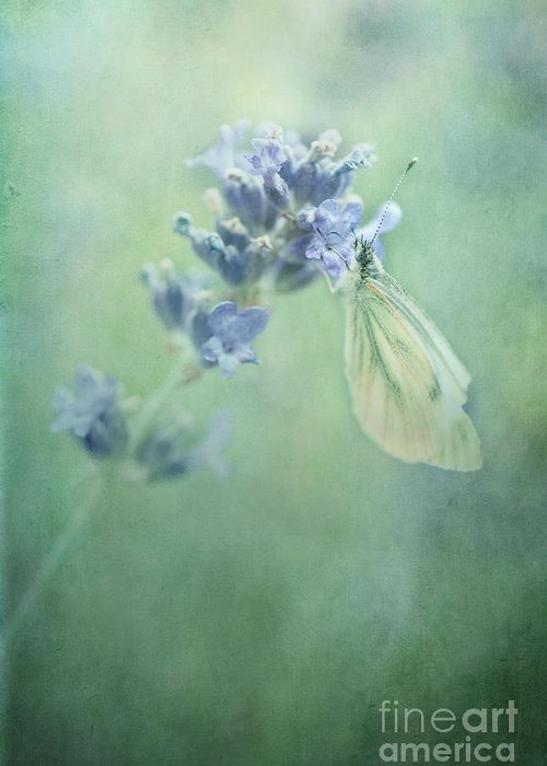 Butterfly Greeting Card featuring the photograph Land Of Milk And Honey by Priska Wettstein