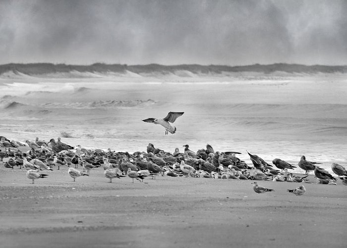 Seagull Greeting Card featuring the photograph Landing In A Blur by Betsy Knapp