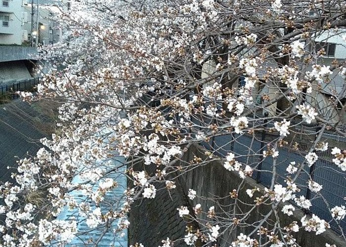 Landscape Greeting Card featuring the photograph #landscape #cherryblossom by Tokyo Sanpopo
