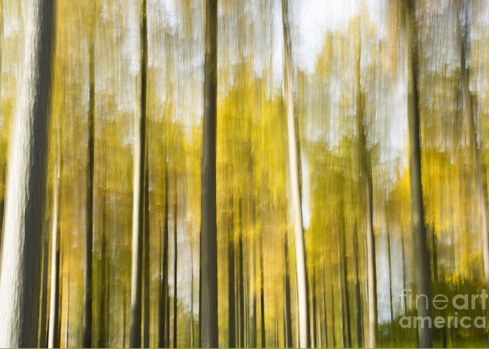 Abstract Greeting Card featuring the photograph Larch Grove Blurred by Anne Gilbert