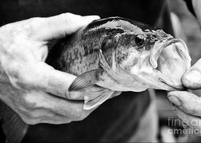 Fish Greeting Card featuring the photograph Large Mouth Bass by Cheryl Baxter
