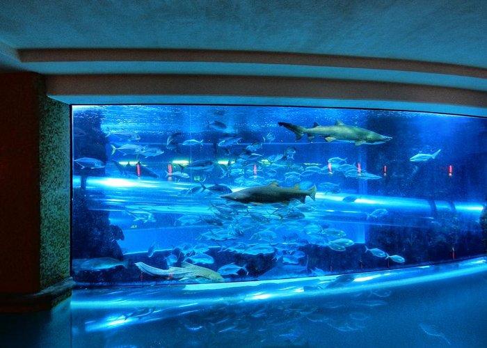 Aquarium Greeting Card featuring the photograph Las Vegas 067 by Lance Vaughn