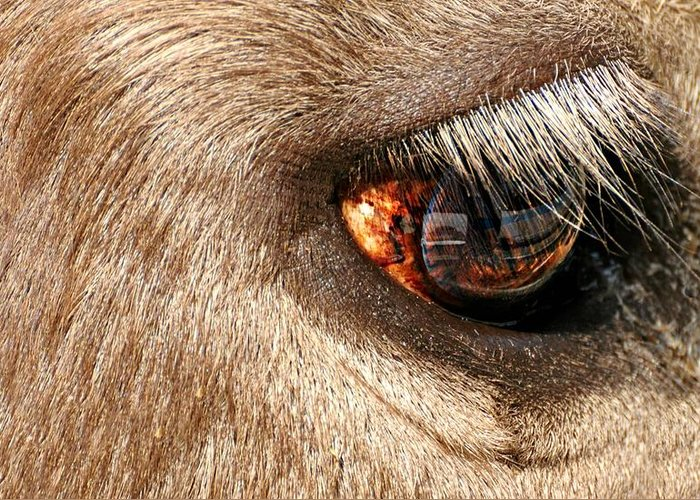 Eye Greeting Card featuring the photograph Lashes by Diana Angstadt