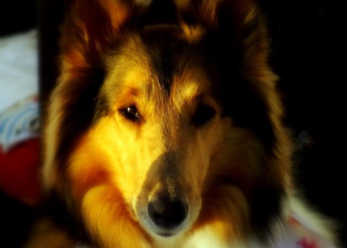 Dogs Greeting Card featuring the photograph Lassie Come Home by Karen Wiles