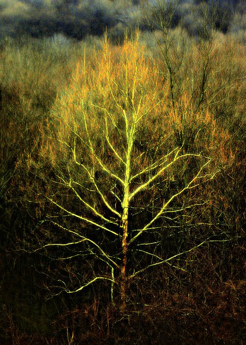Tree Greeting Card featuring the photograph Last Breath Of Fall by Scott Stolsenberg
