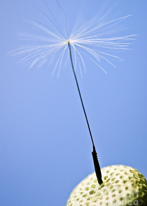 Dandelion Greeting Card featuring the photograph Last Dandelion Seed by Elena Elisseeva