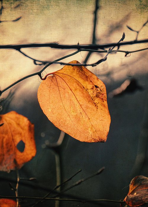 Leaf Greeting Card featuring the photograph Last Leaves by Taylan Apukovska