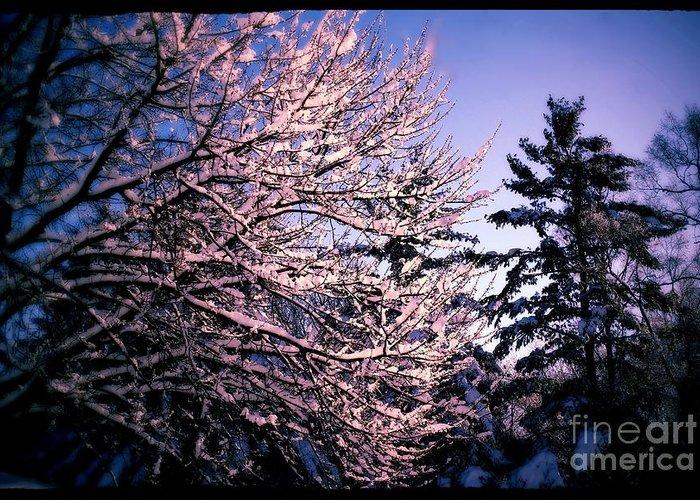 Frank-j-casella Greeting Card featuring the photograph Last Peek Of Winter Sun by Frank J Casella