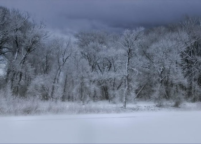 Tree Greeting Card featuring the photograph Late Snow At The Rio Grande by Ellen Heaverlo