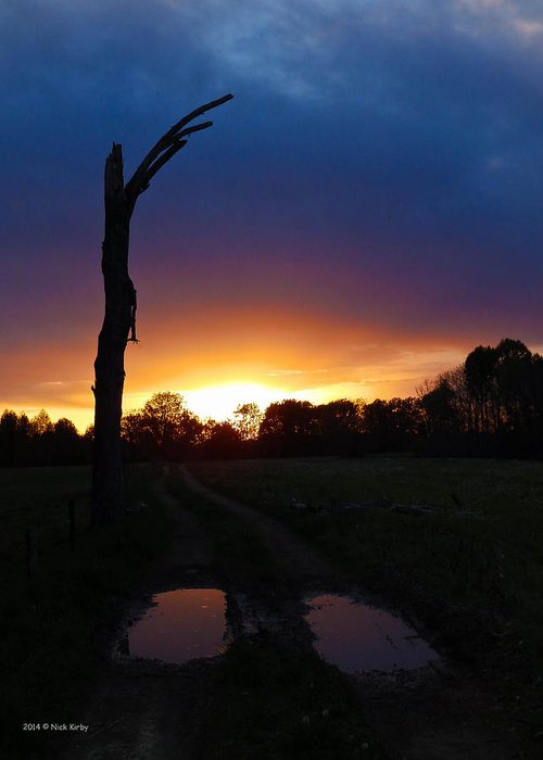 Tree Greeting Card featuring the photograph Late Sunset And Tree by Nick Kirby