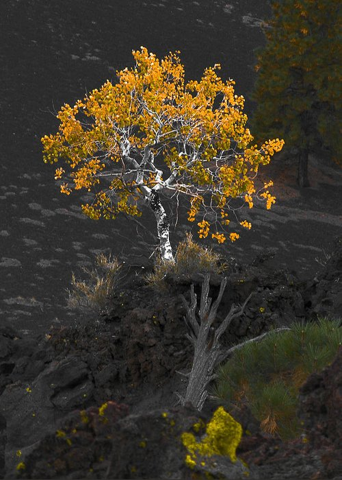 Tree Greeting Card featuring the photograph Lava Field by Jim Painter