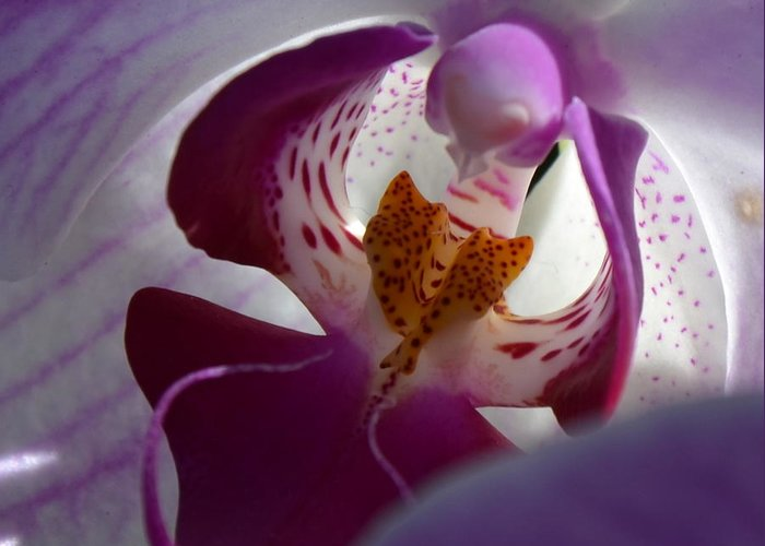 Orchid Greeting Card featuring the photograph Lavendar World by AnnaJo Vahle