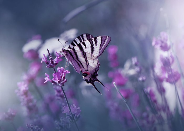 Flower Greeting Card featuring the photograph Lavender Queen... by Juliana Nan