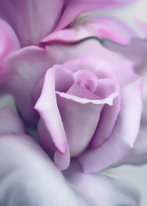 Rose Greeting Card featuring the photograph Lavender Rose Flower Portrait by Jennie Marie Schell