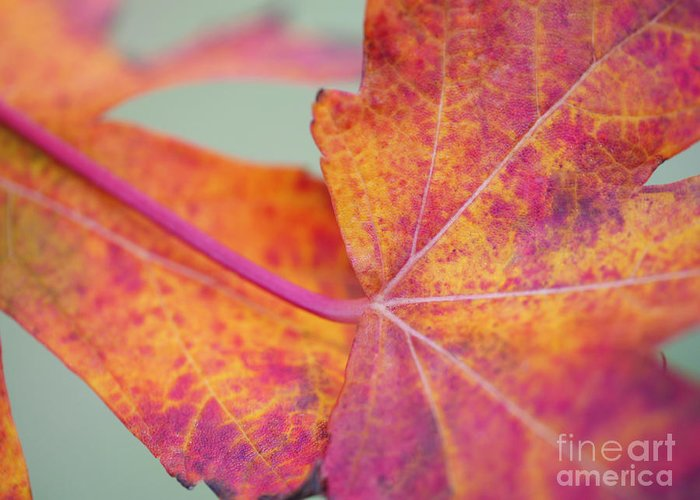 Leaf Abstract Greeting Card featuring the photograph Leaf Abstract In Pink by Irina Wardas