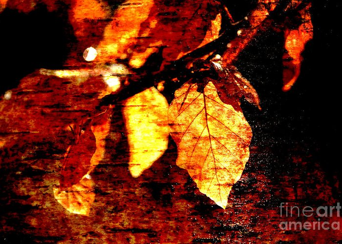 Hallway Greeting Card featuring the photograph Leaf And Light Abstract by Natalie Kinnear