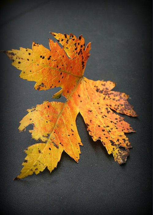 Nature Greeting Card featuring the photograph Leaf Portrait by Linda Sannuti