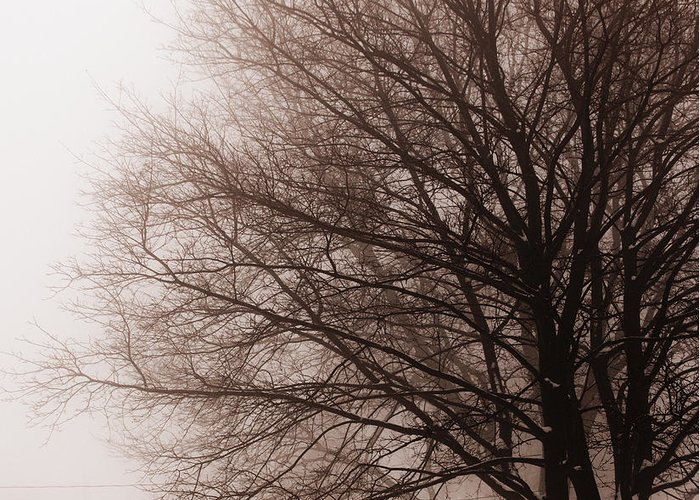Tree Greeting Card featuring the photograph Leafless Tree In Fog by Elena Elisseeva