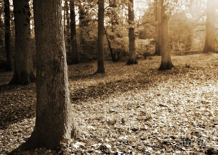 Autumn Greeting Card featuring the photograph Leafy Autumn Woodland In Sepia by Natalie Kinnear