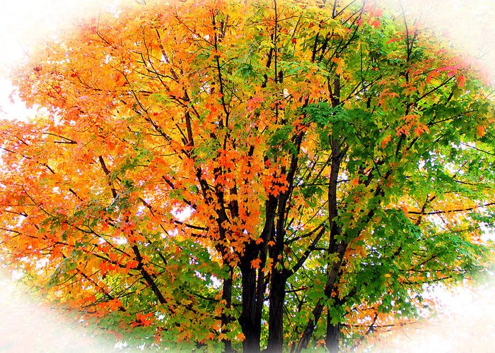 Tree Greeting Card featuring the photograph Leaves Changing Colors by Cynthia Guinn