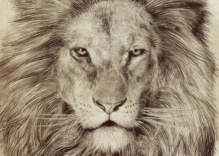 Lion Greeting Card featuring the drawing Leo by Eric Fan