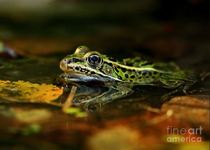 Amphibian Greeting Card featuring the photograph Leopard Frog Floating On Autumn Leaves by Inspired Nature Photography Fine Art Photography