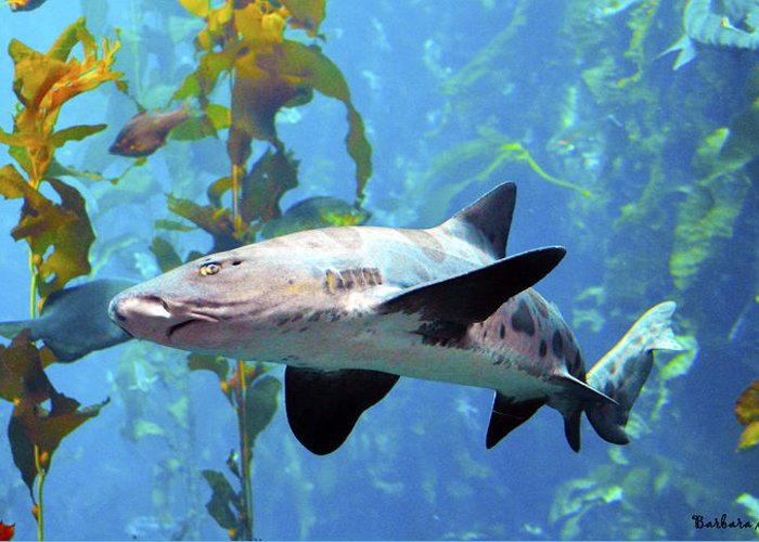 Barbara Snyder Greeting Card featuring the digital art Leopard Shark by Barbara Snyder