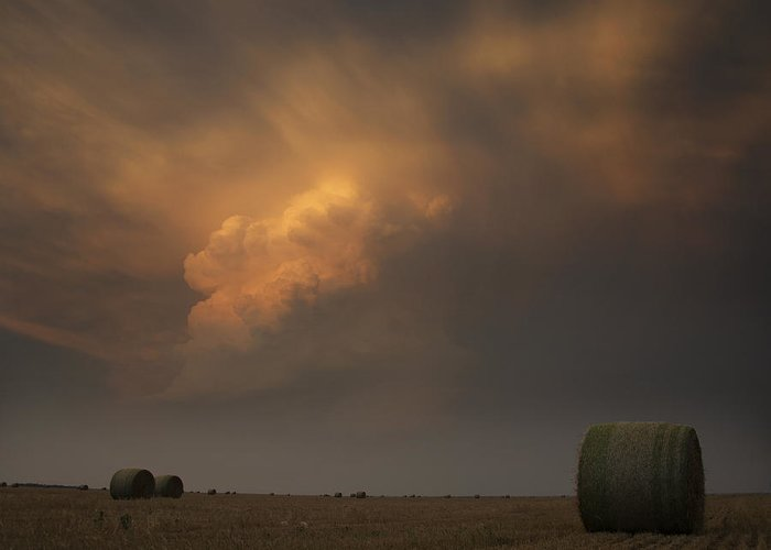 Plains Greeting Card featuring the photograph Life On The Plains by Ryan Smith