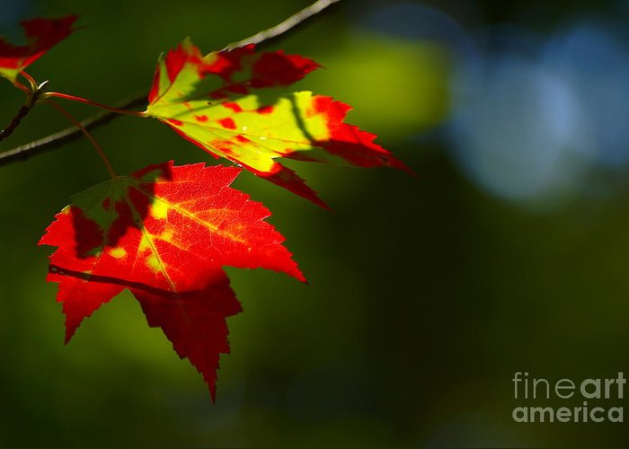 Autumn Greeting Card featuring the photograph Light Gives Us All A Chance by Aimelle