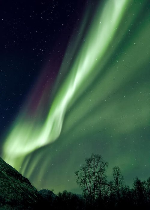 Aurora Greeting Card featuring the photograph Light In The Sky by Dave Bowman