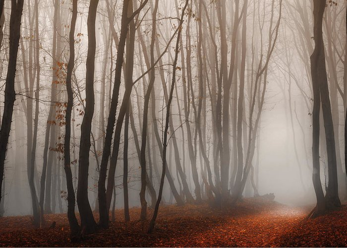 Forest Greeting Card featuring the photograph Light Path by Dobromir Dobrinov
