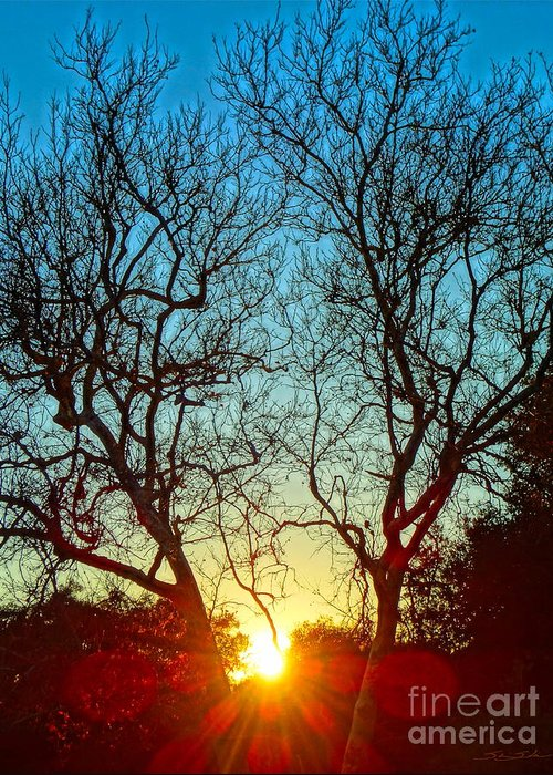 Trees Greeting Card featuring the photograph Light Sanctuary by Gem S Visionary