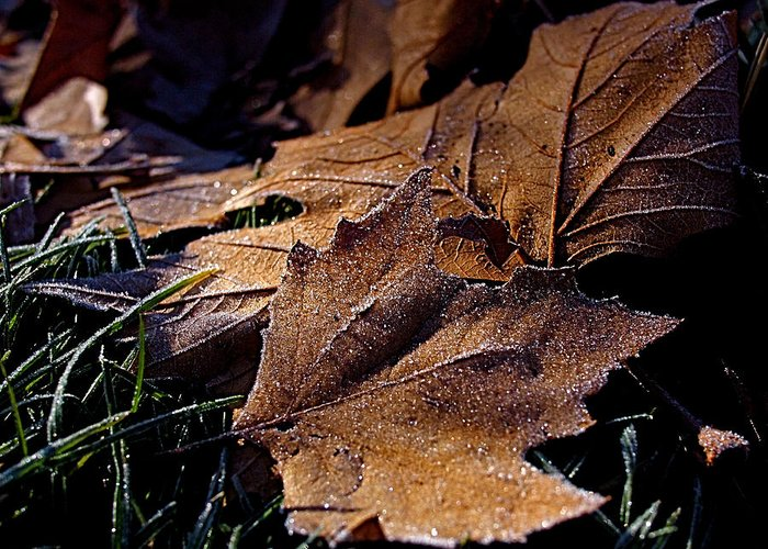 Leaves Greeting Card featuring the photograph Lightly Frosted by Rona Black