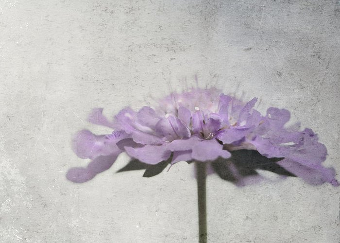 Floral Greeting Card featuring the photograph Lilac by Annie Snel