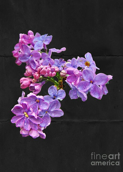 Lilac Greeting Card featuring the photograph Lilacs - Perfumed Dreams by Mother Nature