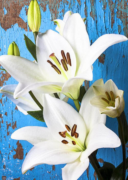 White Lily Greeting Card featuring the photograph Lilies Against Blue Wall by Garry Gay