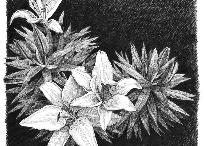 Lilies Greeting Card featuring the drawing Lilies In Pen And Ink by Janet King