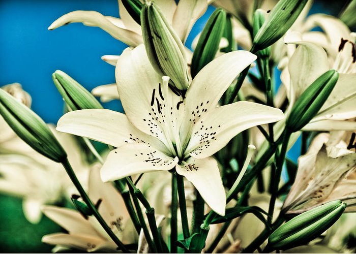Lily Greeting Card featuring the pyrography Lilies In White by Shirley Tinkham