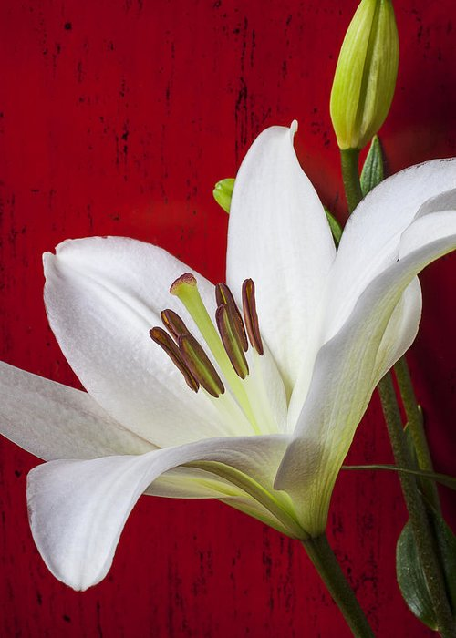 White Lily Greeting Card featuring the photograph Lily Against Red Wall by Garry Gay