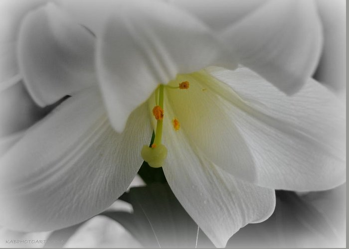 Lily Greeting Card featuring the photograph Lily Focal by Kathy Barney