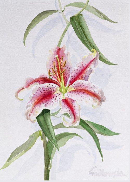 Botanical: Flowers 19th Greeting Card featuring the painting Lily by Izabella Godlewska de Aranda