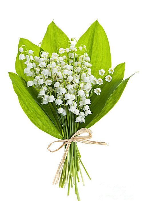 Flower Greeting Card featuring the photograph Lily-of-the-valley Bouquet by Elena Elisseeva