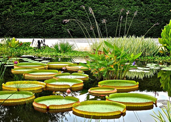 Lily Greeting Card featuring the photograph Lily Pad Garden by Frozen in Time Fine Art Photography