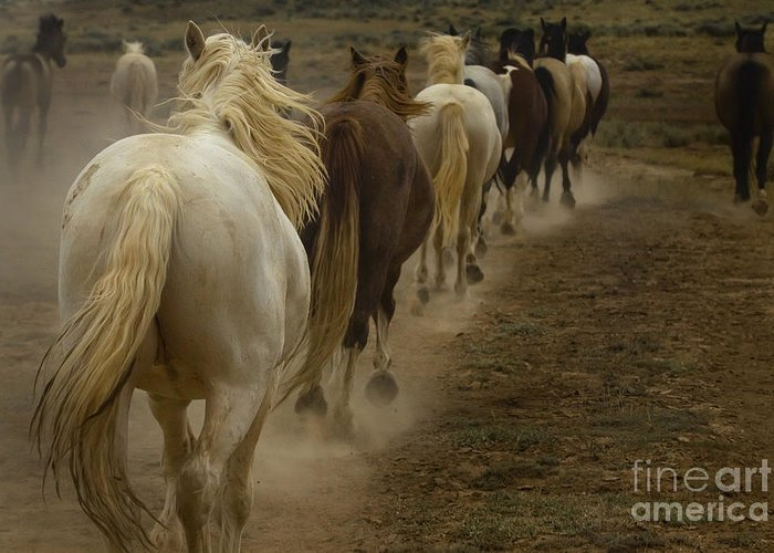 Equus Ferus Greeting Card featuring the photograph Line Of Mares by J L Woody Wooden