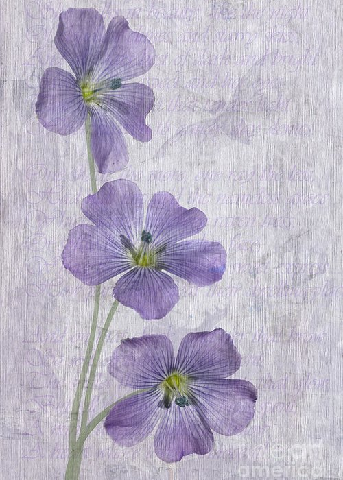 Linseed Flowers Greeting Card featuring the photograph Linum by John Edwards