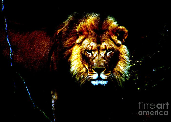 Lion Greeting Card featuring the photograph Lion Eyes by Nick Gustafson