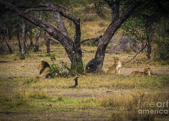 Places Greeting Card featuring the photograph Lion In The Dog House by Darcy Michaelchuk